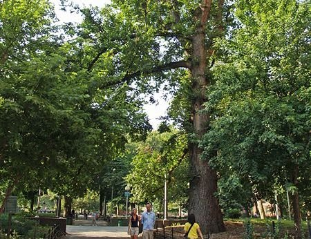 Where are New York City's oldest living trees? - The ...