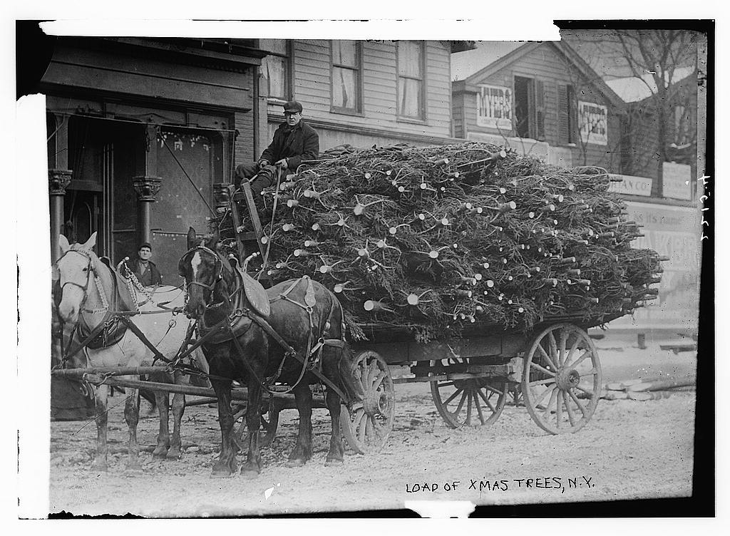 making green the history of new yorks christmas tree market the bowery boys new york city history - Christmas Tree Market