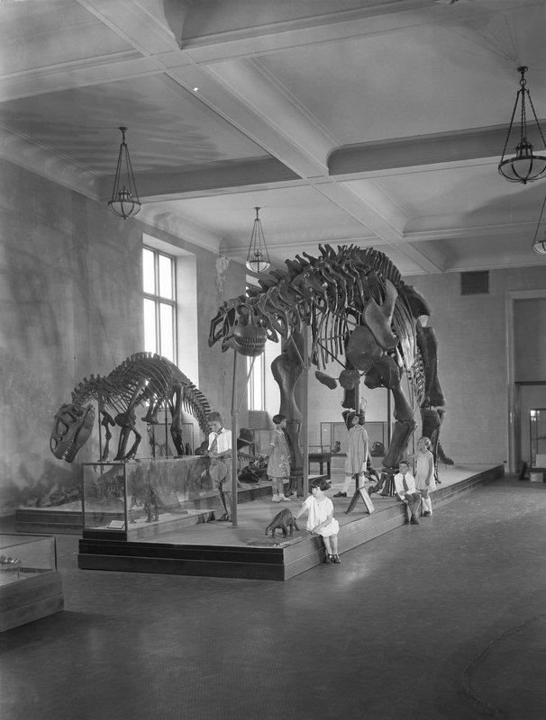 Courtesty Irving Dutcher, courtesy AMNH